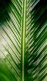 Зеленый цвет выходит Patern Стоковые Изображения RF