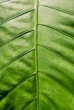 Зеленый цвет выходит Patern Стоковые Изображения