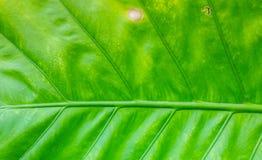 Зеленый цвет выходит Patern Стоковое фото RF