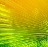 Зеленый цвет выходит Patern Стоковые Фото