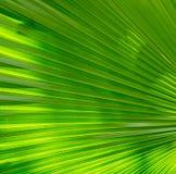 Зеленый цвет выходит Patern Стоковые Фотографии RF