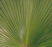 Зеленый цвет выходит Patern Стоковое Фото