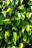 зеленый цвет выходит spiderwebs Стоковые Фотографии RF