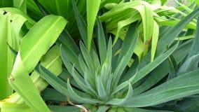 зеленый цвет выходит succulent Стоковое Изображение RF