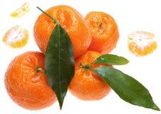 зеленый цвет выходит tangerines Стоковое Изображение