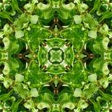 Зеленый цвет выходит предпосылка 5 картины плитки Стоковые Изображения