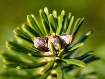 зеленый цвет выходит семена Стоковое Изображение RF