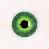 зеленый цвет глаза Стоковая Фотография
