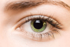 зеленый цвет глаза Стоковые Изображения RF