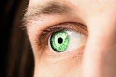 зеленый цвет глаза Стоковая Фотография RF