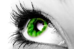 зеленый цвет глаза стоковое фото