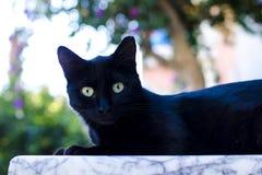 зеленый цвет глаз черного кота Стоковые Фотографии RF