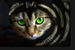 зеленый цвет глаз черного кота Стоковое фото RF