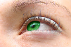 зеленый цвет глаз Стоковое Изображение RF