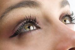 зеленый цвет глаз Стоковая Фотография