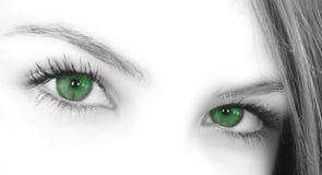 зеленый цвет глаз Стоковые Фото