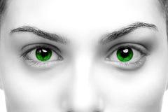 зеленый цвет глаз Стоковое фото RF