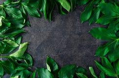 зеленый цвет граници выходит груша Листья пионов Рамка зеленых листьев Предпосылка камня темной черноты Плоское положение, взгляд Стоковое Изображение