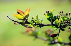 зеленый цвет детали ветви Стоковое Изображение RF