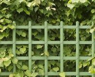 зеленый цвет загородки Стоковая Фотография RF