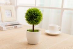 Зеленый цвет засаженный на офисе стола стоковые изображения