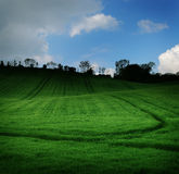 зеленый цвет затемненного поле Стоковая Фотография