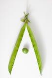 зеленый цвет изолировал одну белизну стручка гороха Стоковая Фотография
