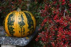Зеленый цвет и апельсин striped тыква с яркими красными ягодами Стоковые Фото