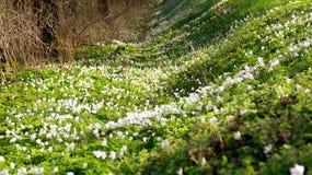 Зеленый цвет и белизна идут совместно весной стоковое фото rf