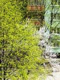 Зеленый цвет и белизна Стоковая Фотография