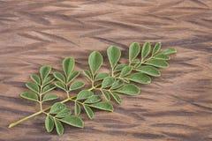 Зеленый цвет и свежие листья moringa - Moringa oleifera стоковые изображения rf