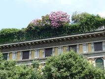 Зеленый цвет и цветя терраса на крыше старинного здания в центре Милана r стоковые фотографии rf