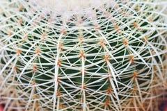 зеленый цвет кактуса стоковые фото