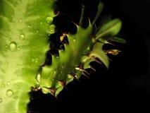 зеленый цвет кактуса стоковое изображение rf