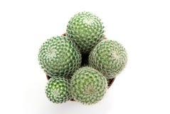 зеленый цвет кактуса стоковые изображения