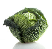 зеленый цвет капусты курчавый Стоковые Фото