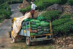 Зеленый цвет Кералы Индии плантации чая Munnar стоковые фото