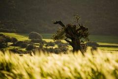 зеленый цвет Кипра Стоковые Изображения RF