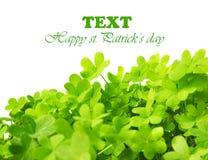 зеленый цвет клевера граници свежий Стоковое Изображение