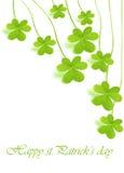 зеленый цвет клевера свежий Стоковое Изображение