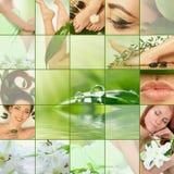 зеленый цвет коллажа Стоковое Изображение RF