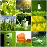 зеленый цвет коллажа Стоковые Изображения