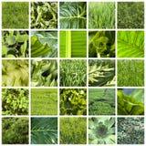 зеленый цвет коллажа Стоковое Изображение