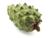 зеленый цвет конуса Стоковые Фото