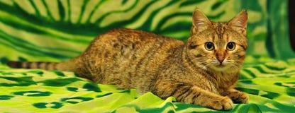 зеленый цвет кота Стоковая Фотография RF