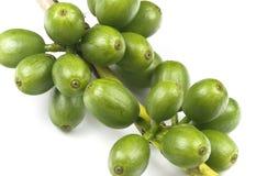 зеленый цвет кофе фасолей Стоковые Изображения