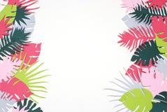 Зеленый цвет ладони выходит тропическое экзотическое дерево Isoalted на белую предпосылку Квадратное изображение Лист шаблона Pat стоковое изображение