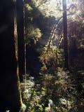 Зеленый цвет леса Стоковое Фото