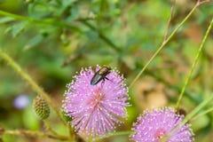 Зеленый цвет летает на розовый цветок в саде стоковые изображения rf