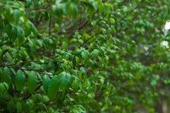 зеленый цвет листает мало стоковые фото